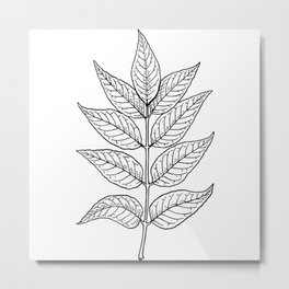 Ash Leaves In Black Minimalist Nature Metal Print