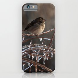 On an Icy Branch iPhone Case
