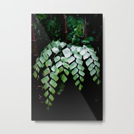 Diamond Maidenhair Metal Print