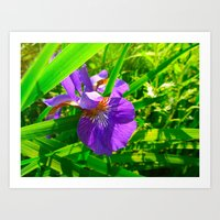 Peeping Purple and Yellow Flower  Art Print