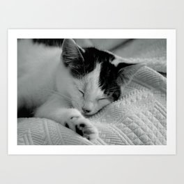 Sleepy Cat - Black and White Cat Photo Art Print