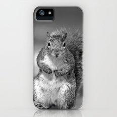 Squirrel Slim Case iPhone (5, 5s)