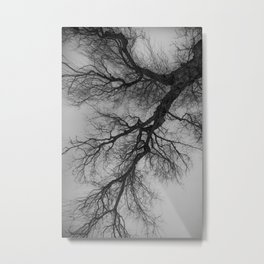Lungs of the Earth | Nature Photography | Weeping Willow Metal Print