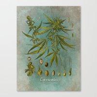 cannabis Canvas Prints featuring Cannabis by jbjart