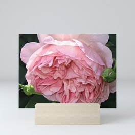 Rose Pierre Mini Art Print