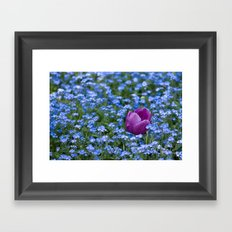 Pink Tulip in the blue Framed Art Print