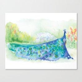 Peacock in the Garden Watercolor Canvas Print