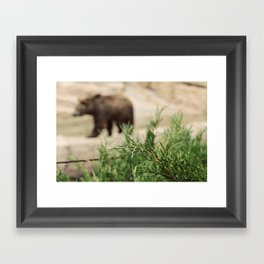 Mr Brown Bear Framed Art Print