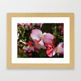 Begonia in the Rose Garden Framed Art Print