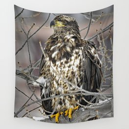 Immature Bald Eagle Wall Tapestry