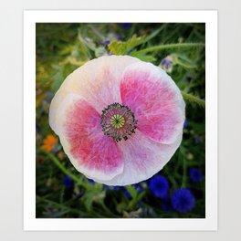 Poppy World Art Print