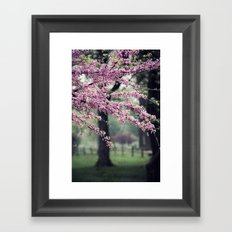 Blossoms for the Road ahead Framed Art Print