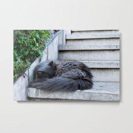 Ash Cat. Metal Print