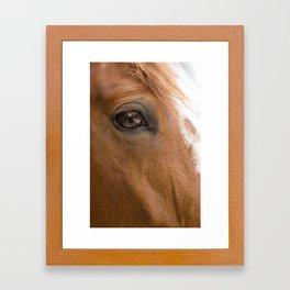 HORSE 2 Framed Art Print