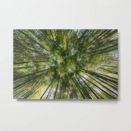 Bamboos Bottom View Metal Print