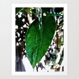 Bright Green Leaf Art Print
