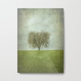 The Lone Olive Tree Metal Print