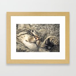 Peaceful cat Framed Art Print
