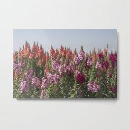 Flowers at Doi Inthanon Metal Print