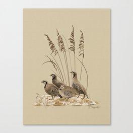 Chukar Partridges Canvas Print