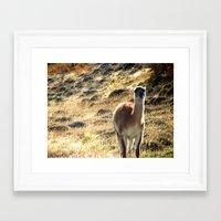 llama Framed Art Prints featuring Llama by Tia_Mala_Onda