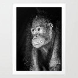 The black&white Orangutan Art Print