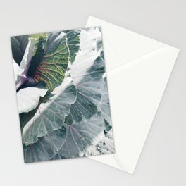 Cabbage in Sunlight Stationery Cards