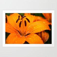 Macro Orange Flower Art Print