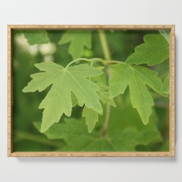 Amber Orientalis Leaves Serving Tray