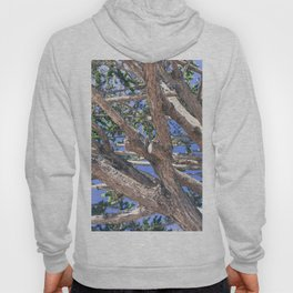 Trees and branches Hoody