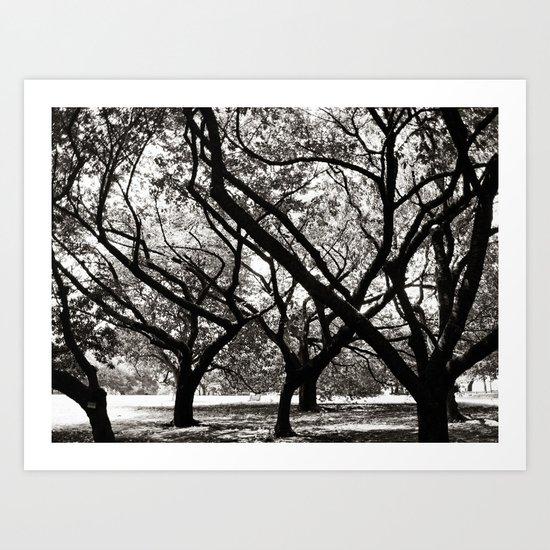 Trees of Harajuku  Art Print