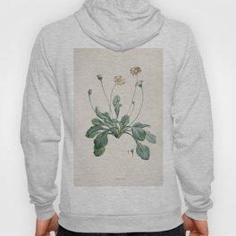 Daisy Flower Botanical Illustration Hoody