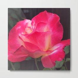 Grandma's Beautiful Rose Untouched Metal Print