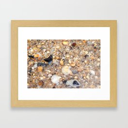 Virginia - Find the Fossil Shark Tooth Framed Art Print