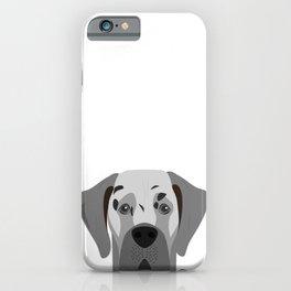 Great Dane Dog Portrait iPhone Case