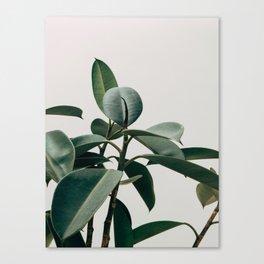 Minimalist Mid Century Modern House Plant Green Leaves Canvas Print
