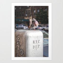 NYC Pigeon Art Print