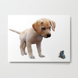 Cute Lab Puppy Eyeing Blue Butterfly Metal Print