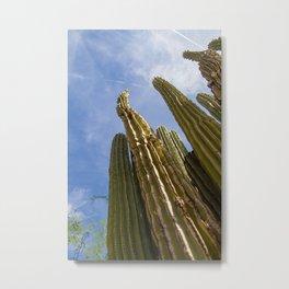 Tall Saguaro Cacti Metal Print