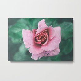 Faded Pink Rose Floral Photography Metal Print