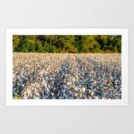 Cotton Field 17 Art Print