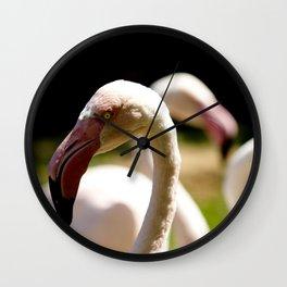 Greater flamingo birds Wall Clock
