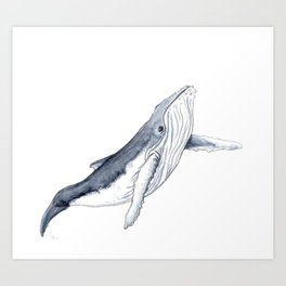 Baby humpback whale for children kid baby Art Print