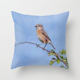 Female Stonechat Throw Pillow