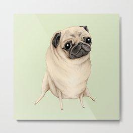 Sweet Fawn Pug Metal Print