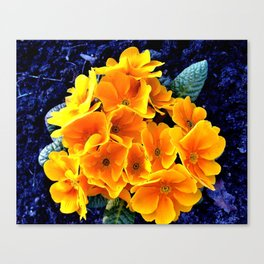 Flower at night Canvas Print