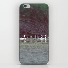 swans, very neatly in a line iPhone Skin