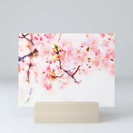 Cherry pink blossoms watercolor painting #8 Mini Art Print