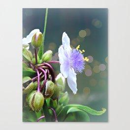 Tradescantia (Spiderwort) Canvas Print