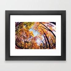 Fisheye Fall  Framed Art Print
